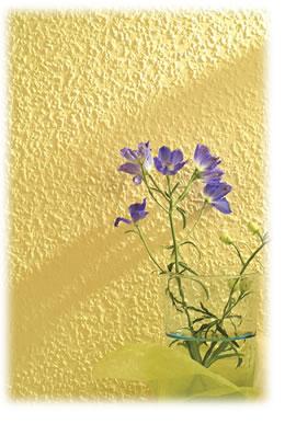 塗装壁紙ルナファーザーチップス